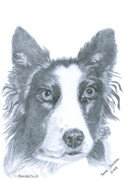 Collie Drawings Posters - Border Collie Poster by Yvonne Johnstone