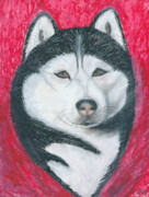 Husky Drawings Metal Prints - Boris the Siberian Husky Metal Print by Ania M Milo