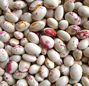 Round Shell Prints - Borlotti Beans Background Print by Yali Shi