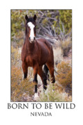 Wild Horse Prints - Born To Be Wild Print by James Marvin Phelps