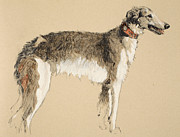 Collar Painting Prints - Borzoi Print by Cecil Charles Windsor Aldin