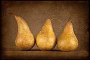 Bosc Prints - Bosc Pears Print by Heather Swan