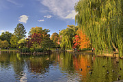 Fall In New England Metal Prints - Boston Public Gardens Metal Print by Joann Vitali