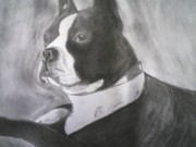 Dogs Drawings - Boston by Shawn Fazenbaker