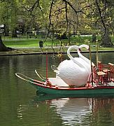 Boston Garden Prints - Boston Swan Boats Print by Barbara McDevitt