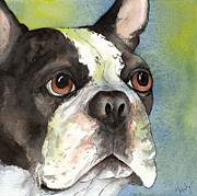 Dog Watercolor Framed Prints - Boston Terrier close up Framed Print by Cherilynn Wood