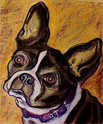 Pet Rescue By Judy Pastels Prints - Boston Terrier Print by D Renee Wilson