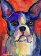 Cute Dogs Drawings Framed Prints - Boston Terrier dog painting  Framed Print by Svetlana Novikova