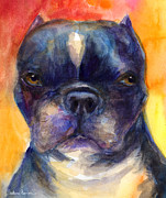 Dog Portrait Artist Drawings - Boston Terrier dog portrait painting in Watercolor by Svetlana Novikova