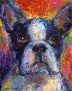 Funny Prints Drawings Posters - Boston Terrier Impressionistic portrait painting Poster by Svetlana Novikova