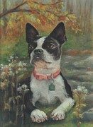 Terriers Pastels - Boston Terrier in an Autumn Setting by Pamela Humbargar