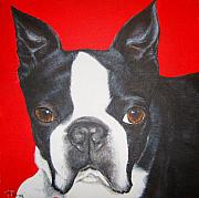 Commission Drawings Posters - Boston Terrier Poster by Keran Sunaski Gilmore