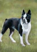 Boston Pastels - Boston Terrier by Lenore Gaudet