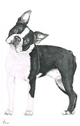 Dog Drawings Originals - Boston Terrier by Murphy Elliott