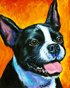 Terriers Framed Prints - Boston Terrier on Orange Framed Print by Dottie Dracos