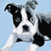 Modern Dog Art Paintings - Boston Terrier by Slade Roberts