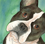 Dog Watercolor Framed Prints - Boston Terrier Tilted Head Framed Print by Cherilynn Wood