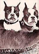 Puppies Drawings Framed Prints - Bostons in a Basket Framed Print by Robbi  Musser