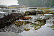 Port Renfrew Framed Prints - Botanical Beach Tidal Pool Framed Print by Marilyn Wilson