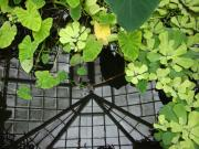 Lilly Pond Photos - Botanical Illusions by Donna Blackhall