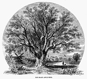 Fort Wayne Framed Prints - Botany: Apple Tree, 1862 Framed Print by Granger