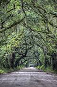 Live Oak Trees Posters - Botany Bay Country Road Poster by Dustin K Ryan