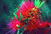 Vivid Colorful Flowers Prints - Bottle Brush Print by Zeana Romanovna