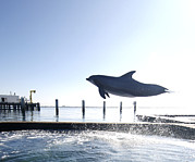 People Trained Prints - Bottlenose Dolphin Jumping Out Of Water Print by Louise Murray