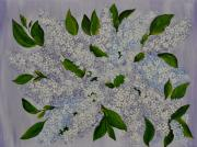 Lilac Originals - Bouchet of Lilacs by Georgeta  Blanaru