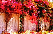 Bdmeredith Prints - Bougainvillea Print by Brian D Meredith