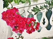 Christine  Fifer - Bougainvillea