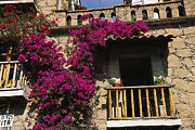 Colonial Architecture Posters - Bougainvillea Flowers On The Balcony Poster by Gina Martin
