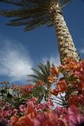 Bougainvillea Flowers Surround A Palm Print by Richard Nowitz