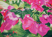Tropical Art Pastels Prints - Bougainvillea Print by John Clark