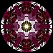 Mandala Digital Art - Bougainvillea Transparency 1 by Marsha Tudor