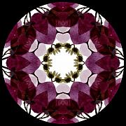 Mandala Digital Art - Bougainvillea Transparency 2 by Marsha Tudor