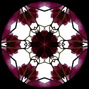 Mandala Digital Art - Bougainvillea Transparency 3 by Marsha Tudor