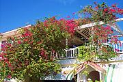 Trellis Prints - Bougainvillea Villa Print by Debbi Granruth
