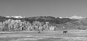 Panorama Art - Boulder County Colorado Front Range Panorama With Horses BW by James Bo Insogna
