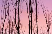 Striking Photography Photos - Boulder County Colors of Dusk Abstract by James Bo Insogna
