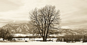 Snowy Field Framed Prints - Boulder County Framed Print by Marilyn Hunt