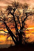 Sunsets Prints Framed Prints - Boulder  County Sunset Framed Print by James Bo Insogna