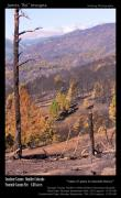 Colorado Framed Prints Posters - Boulder County Wildfire 5 Miles West of Downtown Boulder Poster by James Bo Insogna