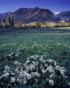 Mules Prints - Boulder Mountains Print by Leland Howard