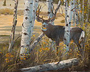 Sporting Art Prints - Boulder Mule deer Print by Scott Thompson