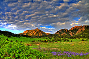Colorado Mountains Posters - Boulder Spring Wildflowers Poster by Scott Mahon