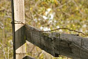 Old Wooden Fence Posts Prints - Bound Print by Bill Owen