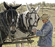 Mule Photos - Bound by Trust by Ron  McGinnis