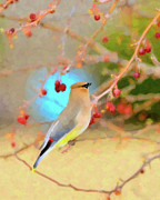 Cedar Waxwing Posters - Bounty Poster by Betty LaRue
