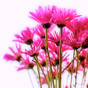 Pink Chrysanthemums Framed Prints - Bouquet of Chrysanthemums Framed Print by Scott Pellegrin
